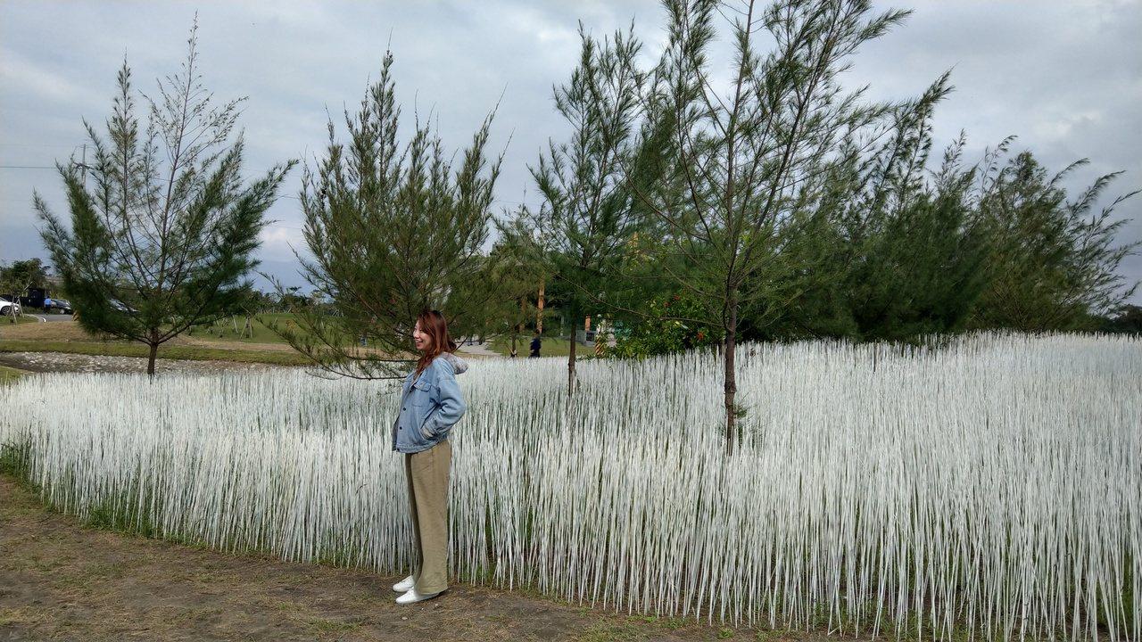 宜蘭壯圍海邊以10萬根白竹籤點綴沙丘,擬造如夢似幻雪景,吸引遊客打卡拍照,成了網...