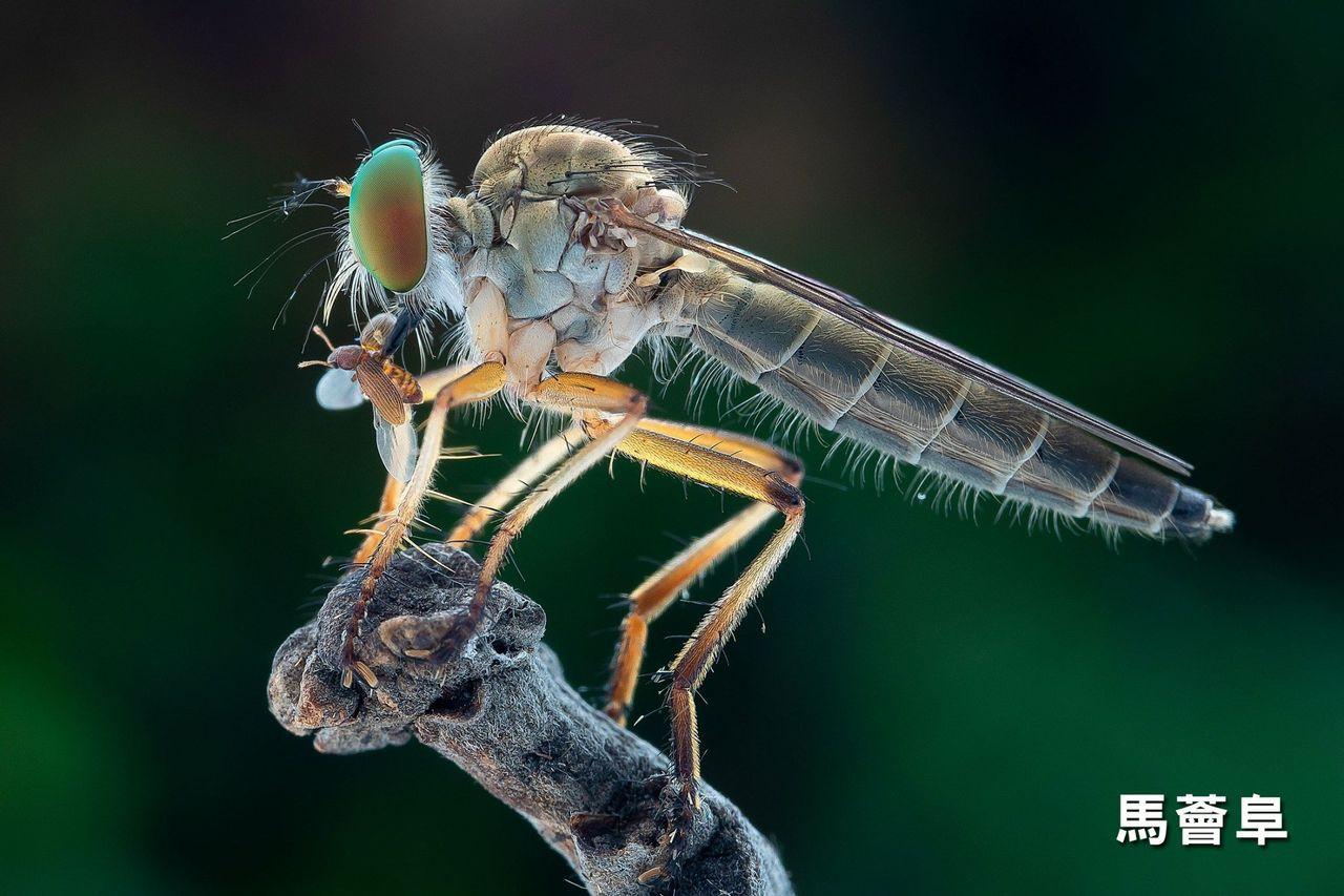 拍鳥俱樂部在楊逵文學館舉辦「超微距攝影聯展」,除欣賞昆蟲繽紛亮麗的色彩,也盼重視...
