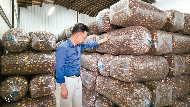 新社本地出產的香菇受走私菇低價競爭滯銷,多數堆在倉庫,菇農欲哭無淚。 圖/江啟臣服務處提供