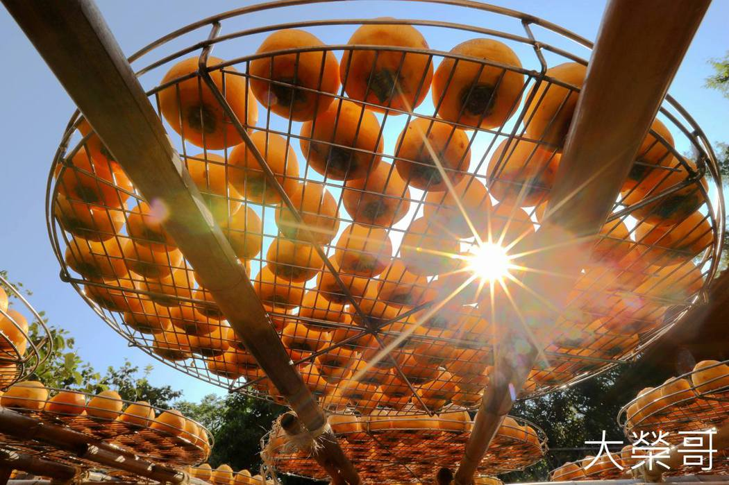 新竹新埔/味衛佳柿餅觀光農場,一字排開的曬柿場