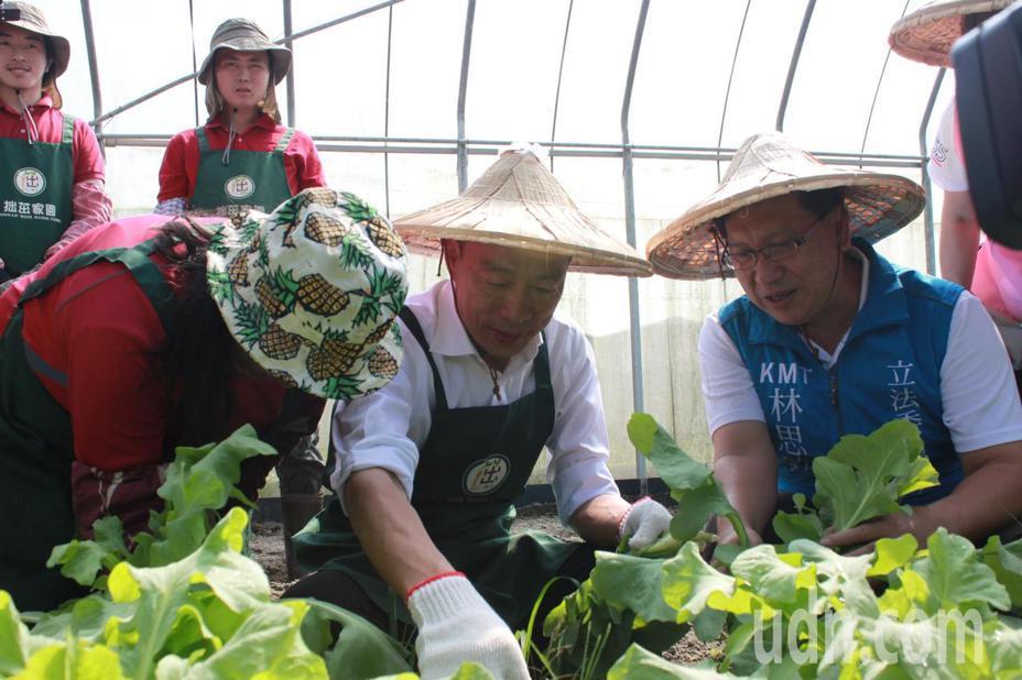 由慢飛天使擔任韓國瑜的小老師,教導他如何種植與拔菜,過程中,小老師還讚韓說「很棒」。記者郭政芬/攝影