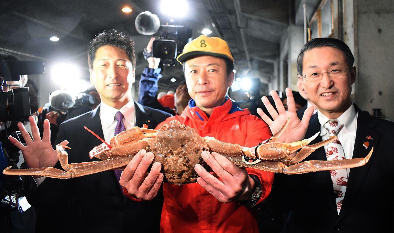 日本松葉蟹捕撈季6日登場。(法新社)