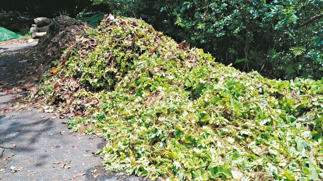 台北植物園有很多植物綠資源可以生產堆肥循環利用。 照片提供/李俊緯