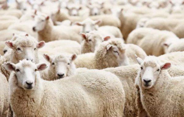 羊毛黨成為大陸另一種社會現象,病態的取財搗亂經濟。 圖/取自知乎