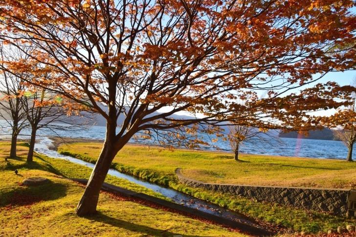 日本東北/橫跨青森和秋田兩縣,十和田湖秋色賞楓