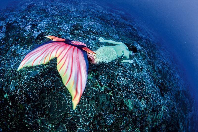為了阻擋深澳電廠建立,王銘祥邀請美人魚遊歷「玫瑰珊瑚園」的特殊奇觀,盼更多人一同...