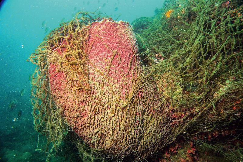 被隨意丟棄的流刺漁網纏繞在桶狀海綿上,影響海底生態。