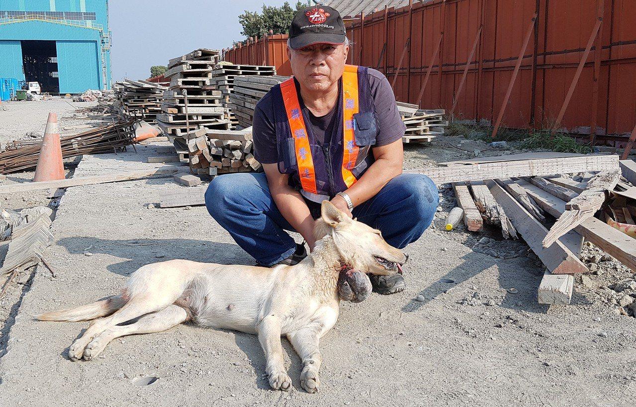 台灣動物緊急救援小組大隊長倪兆成與多位志工趕往現場營救,雖然傷犬怕人,還好個性溫...