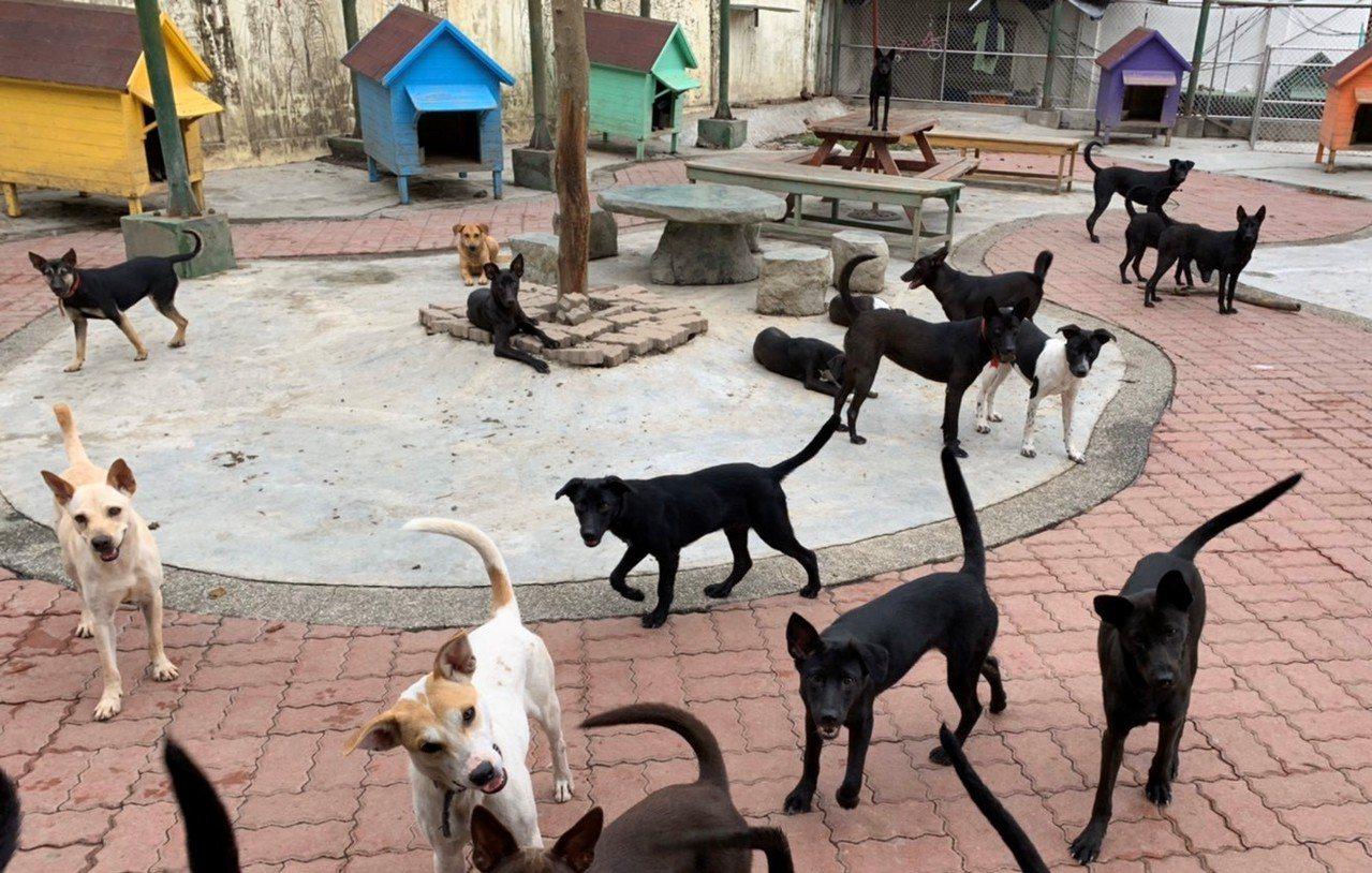 台南市規畫設立動保敎育園區,希望地方支持,以解決流浪犬問題。圖/動保處提供