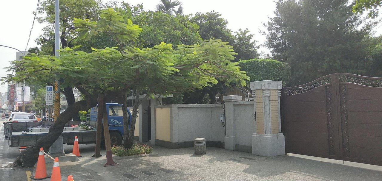 彰化縣長官邸門口左側有1棵「迎客」凰凰木。記者何烱榮/攝影