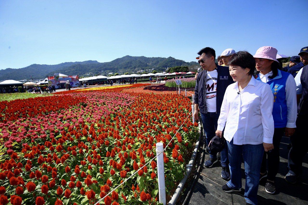 台中新社花海、國際花毯節今開幕,花海面積廣達16公頃。圖/台中市新聞局提供