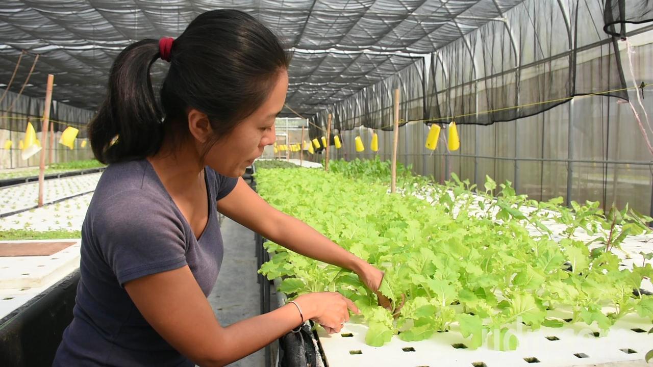 莊婉茹介紹水耕蔬菜種植是將種子先種到海綿上,再放進由保麗龍挖洞形成的空間生長。記...