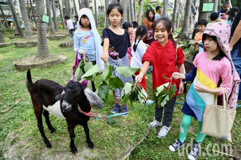 台北市松山文創園區近期出現新地標,養了3隻活生生的羊,吸引鄰近國小來此校外教學。記者魏莨伊/攝影