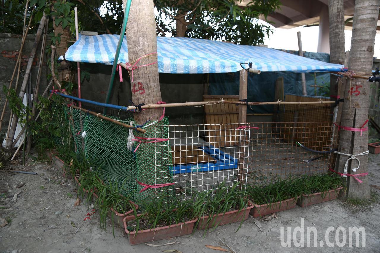 里民搭了棚架,成為3隻羊的住所。記者魏莨伊/攝影