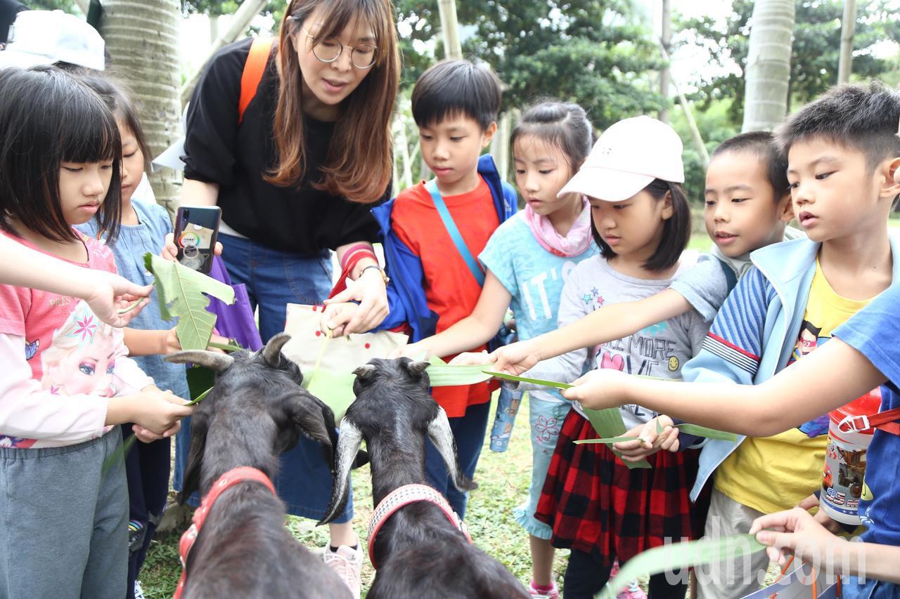台北市松山文創園區近期出現新地標,養了三隻活生生的羊,吸引鄰近國小來此校外教學。...