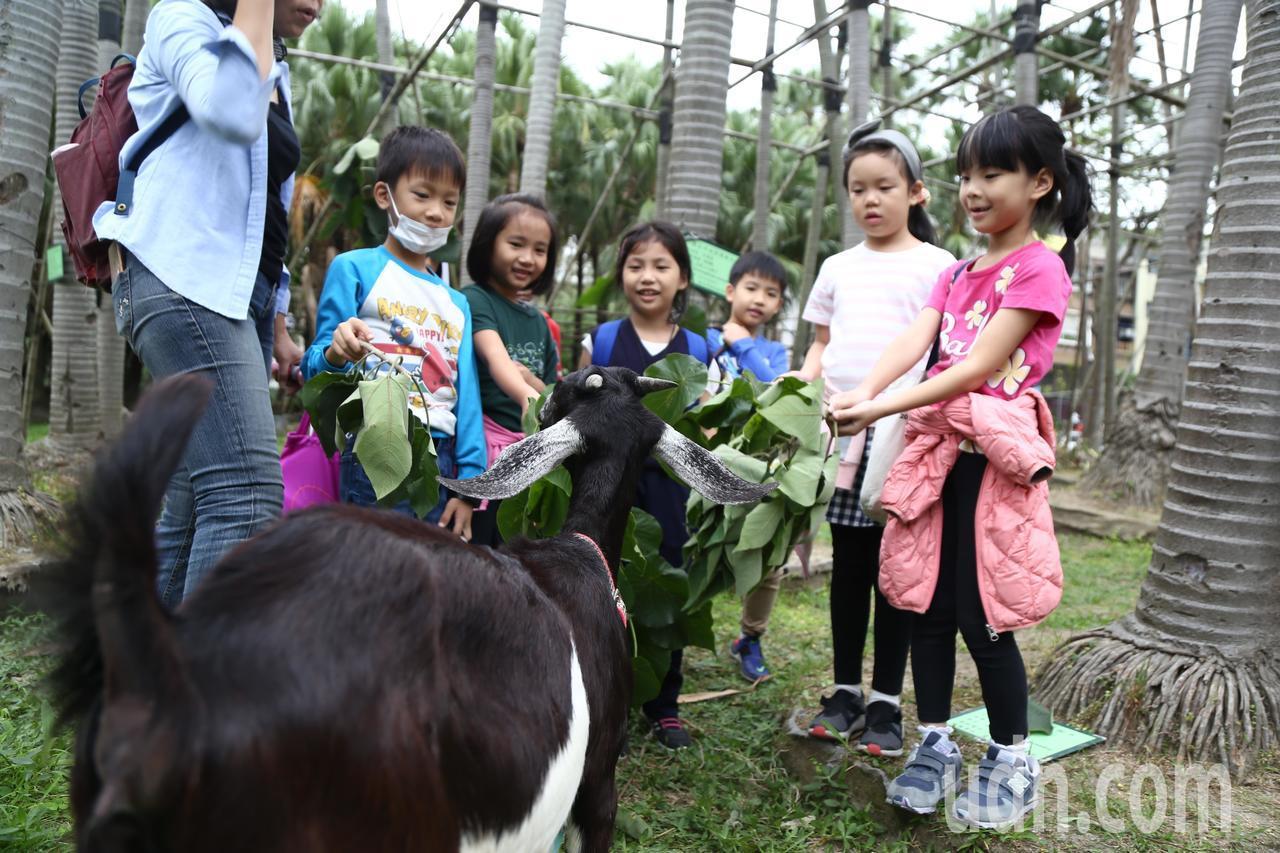 台北市松山文創園區近期出現新地標,養了3隻活生生的羊,吸引鄰近國小來此校外教學。...