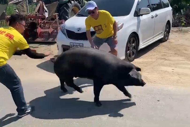送100公斤活豬表支持 嘉義民眾望立委換人做做看
