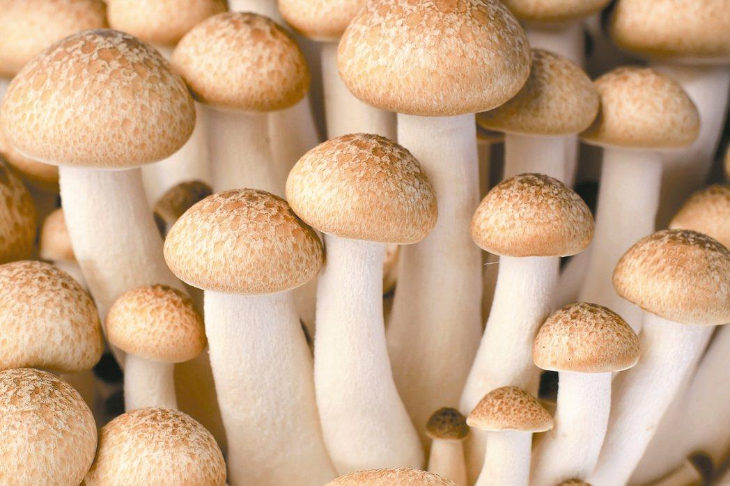 養生風潮正夯,民間四大長壽菜之一的菇類食譜,琳瑯滿目。 圖/123RF