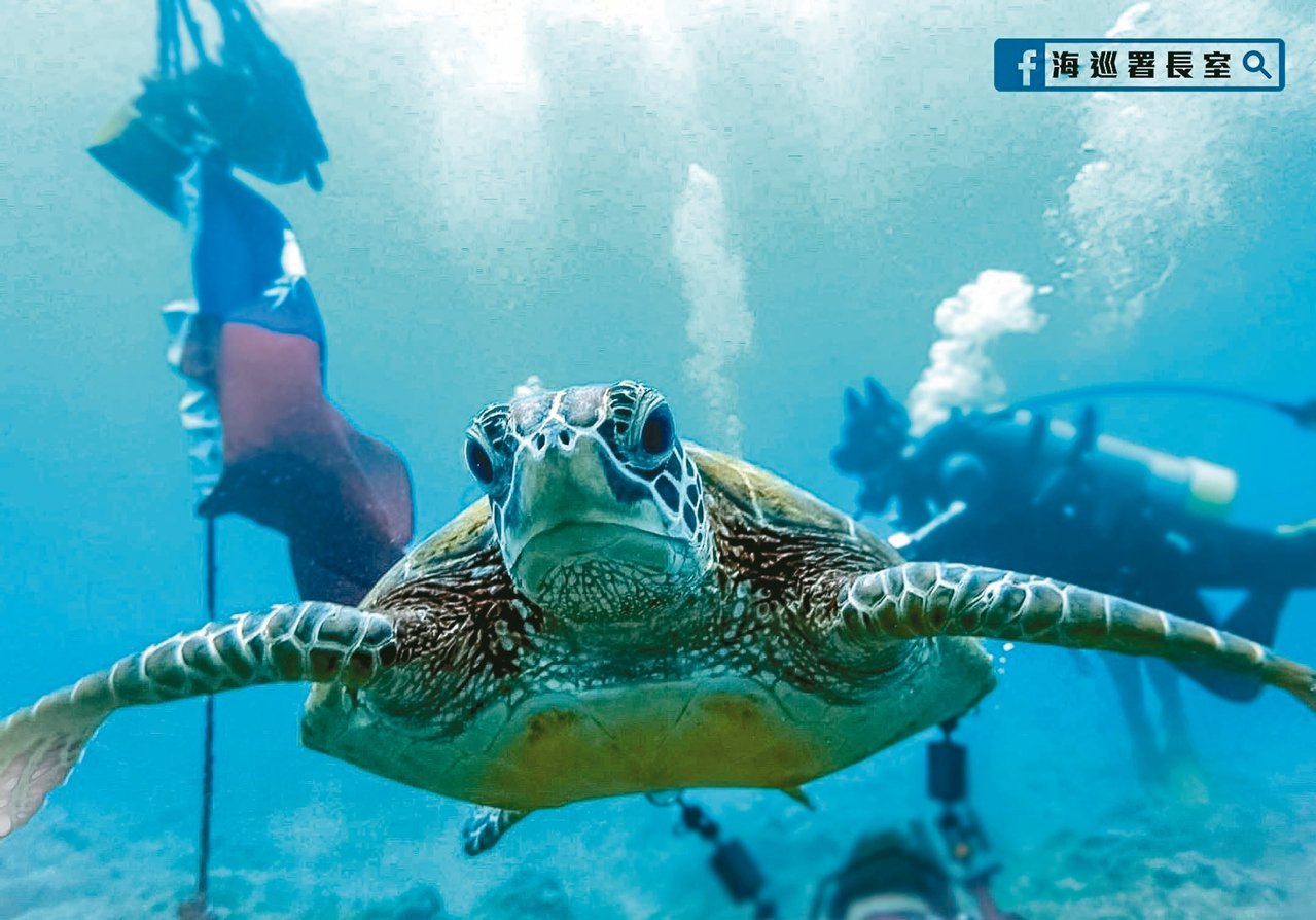 屏東小琉球花瓶石海域,有隻愛親近人、被暱稱「傑尼」的海龜,海巡署發現牠太親近人類...