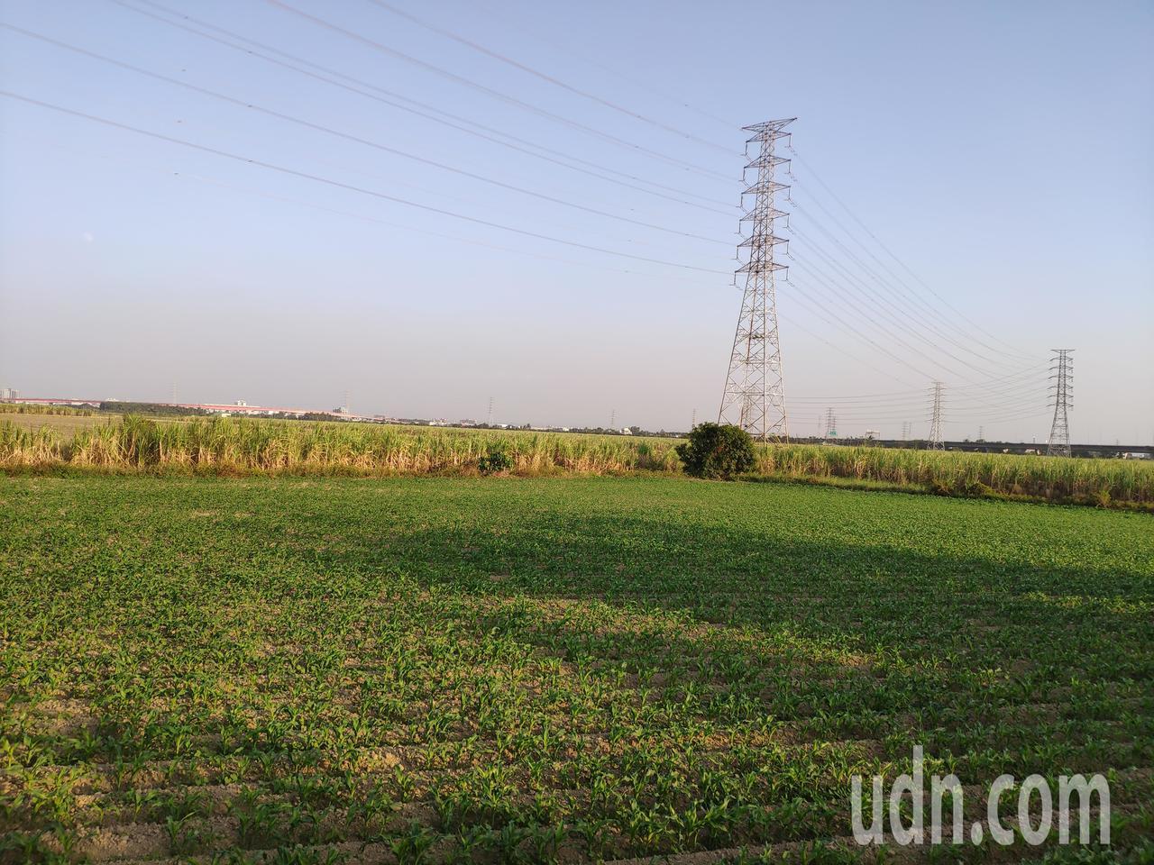 南科三期預定地台糖新市看西農場 。記者謝進盛/攝影