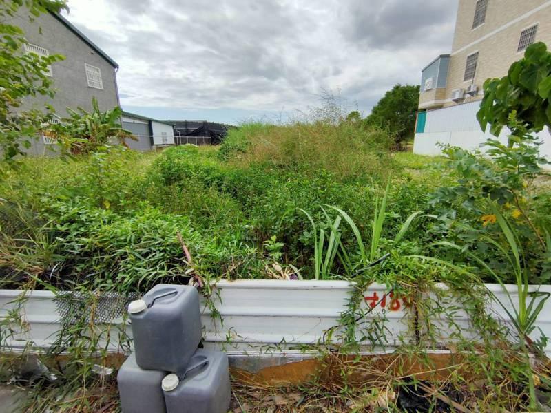 台東縣環保局表示,都市計畫區內私有土地如雜草叢生且逾60公分高(如圖),地主限期內不改善,可依廢物清理法罰款1200元至6000元。記者羅紹平/攝影