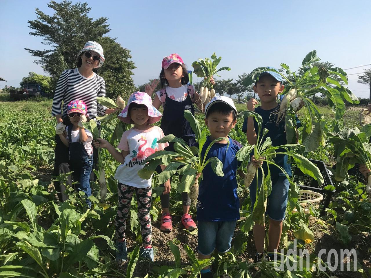 採蘿蔔季節到來,不少家長帶著小朋友到美濃體驗拔蘿蔔樂趣。記者徐白櫻/攝影