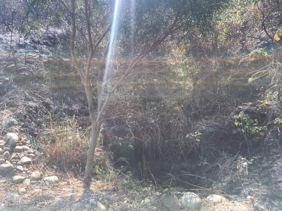 國道三號龍井段昨突然引發坡地山林火警,大火一直到今凌晨近3時才完全撲。圖/取自臉...