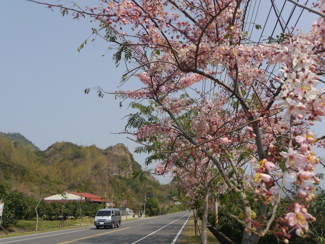 台27甲六龜路段,道路兩旁栽種粉紅陣雨樹。圖/本報資料照