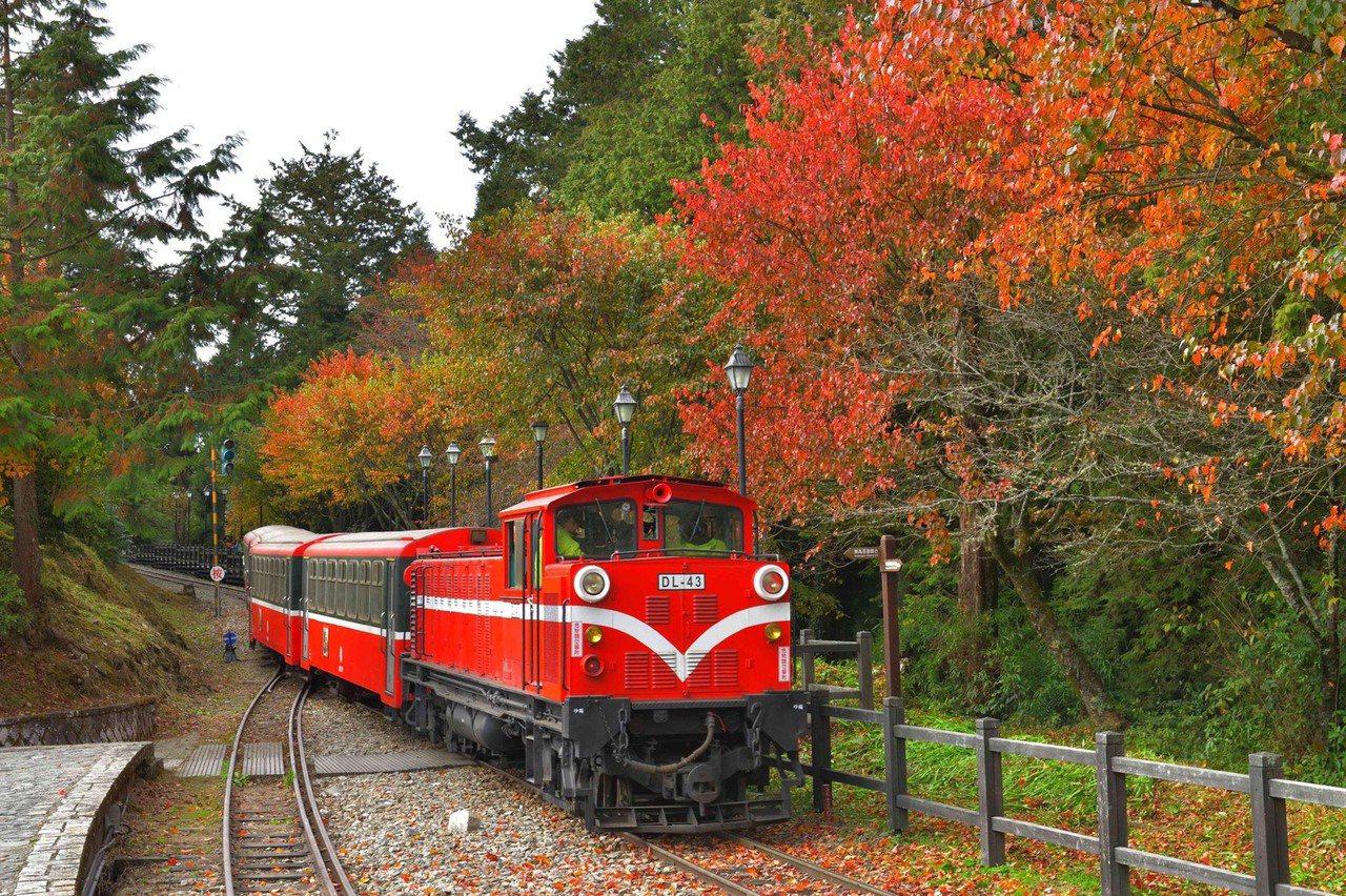 阿里山林鐵及文化資管處,12月推出「款行‧楓旅」主題列車,可搭乘小火車賞楓。 圖...