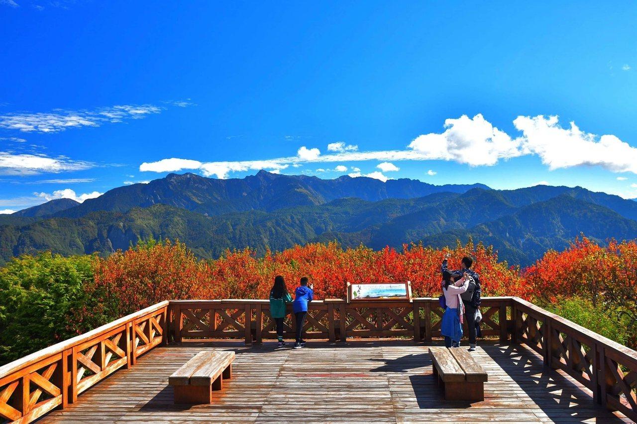 阿里山小笠原觀景平台不僅賞楓,還有青綠山巒、藍天白雲。 圖/黃源明提供
