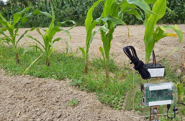 圖四 : 時光寶盒在農地的實際應用情況。(照片提供/廖世偉)