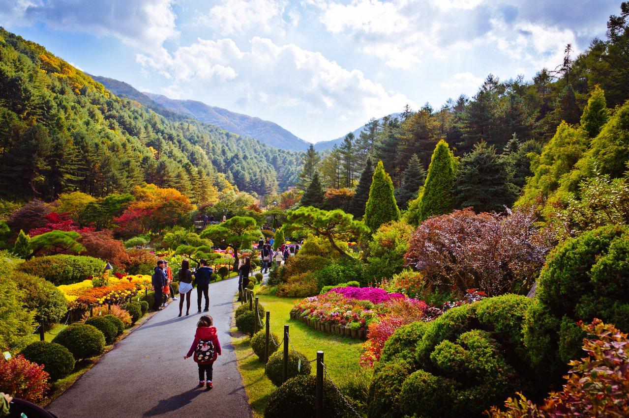 晨靜樹木園廣植各種樹種,秋天來臨時滿園紅葉的景致非常吸引人。© 京畿道觀光公社提...