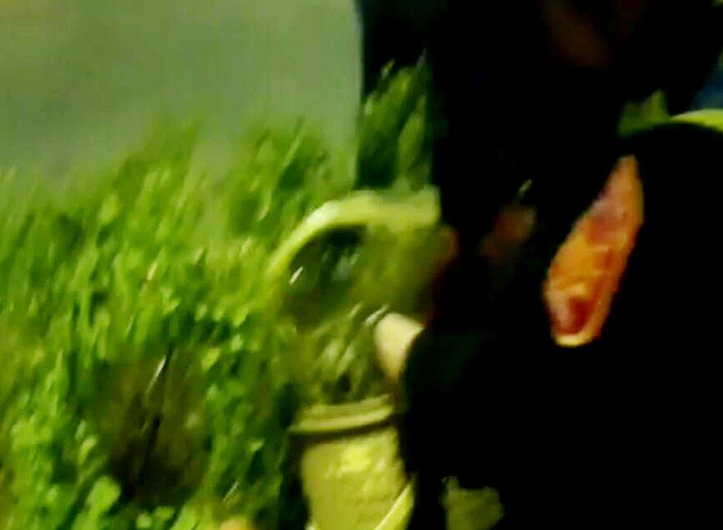 桃園市蘆竹中正路安全島1隻幼貓受傷逗留,警員帶貓籠捕捉「救貓」送獸醫治療。記者曾...