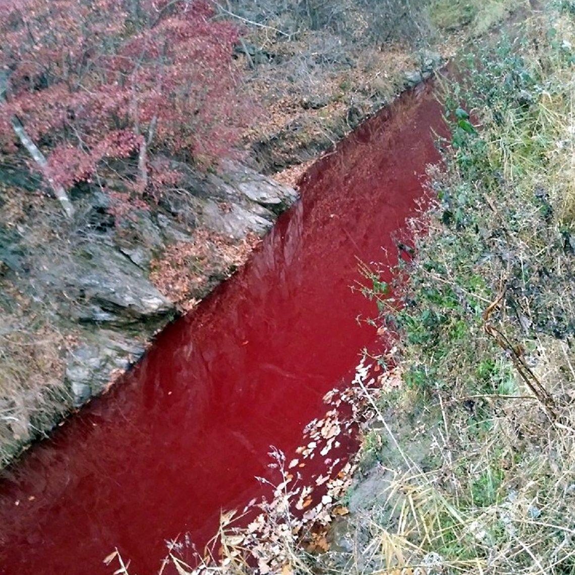 南韓臨津江的血河慘況,其實源於上游沿岸「非洲豬瘟臨時掩埋場」的處理不當,才讓4萬...