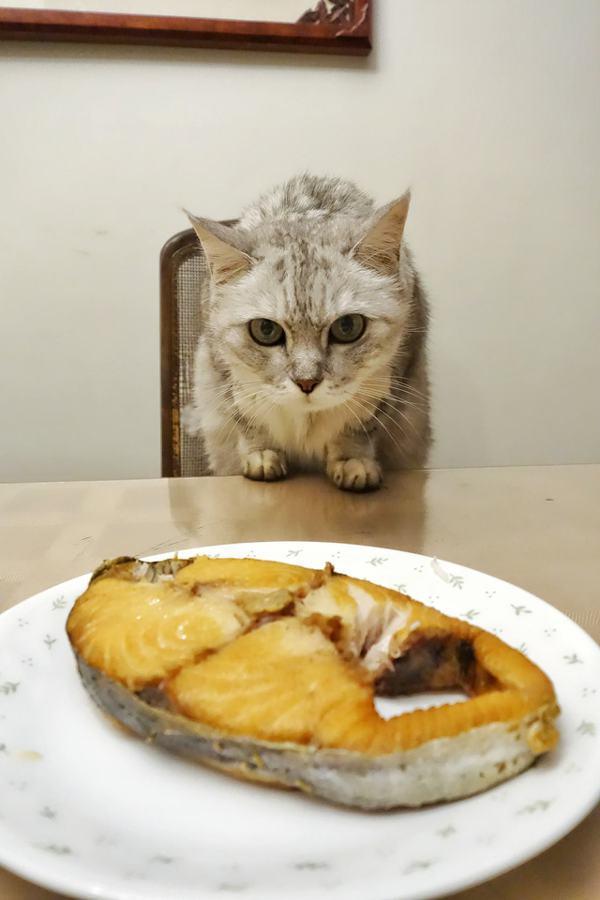 圖片來源/貓咪也瘋狂俱樂部