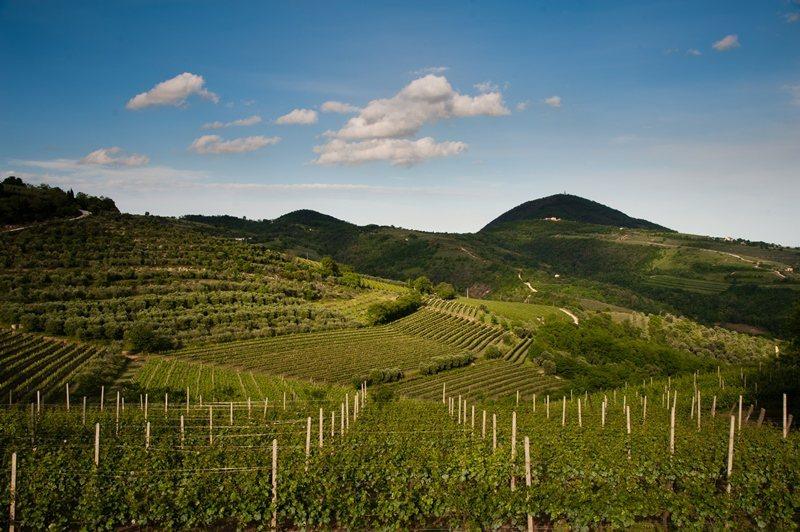 義大利葡萄園。 圖/Prosecco DOC提供
