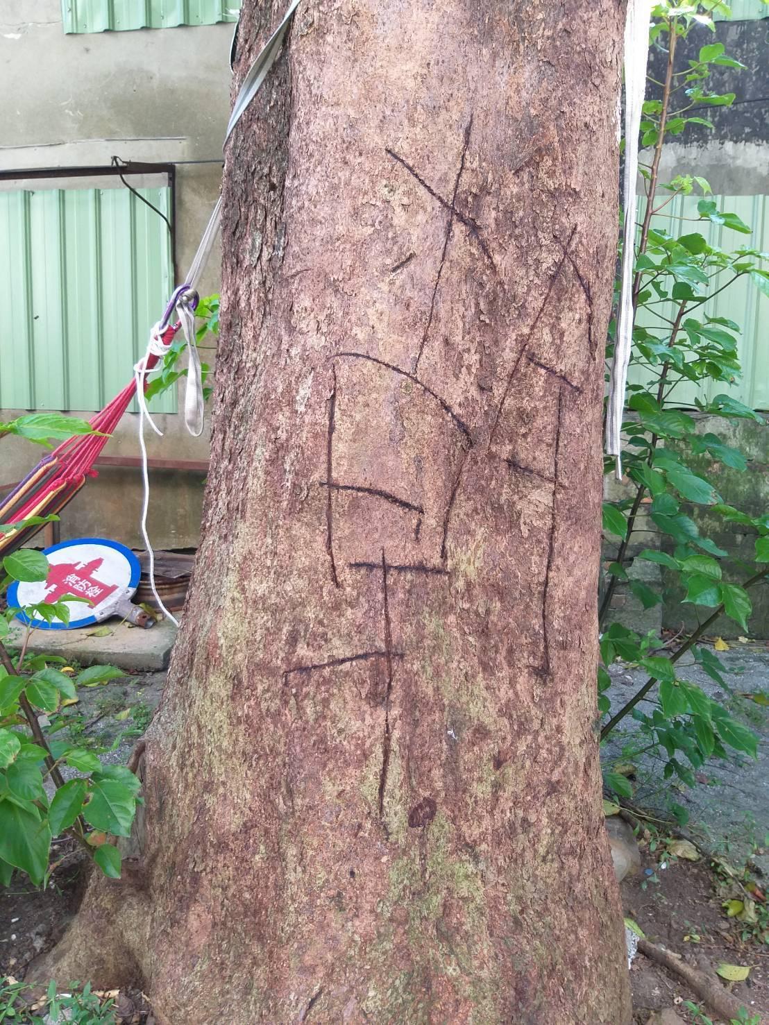 消防局信二分隊後方停車場的茄苳樹,樹幹被人刻了一個大大的「幹」字。記者邱瑞杰/攝...