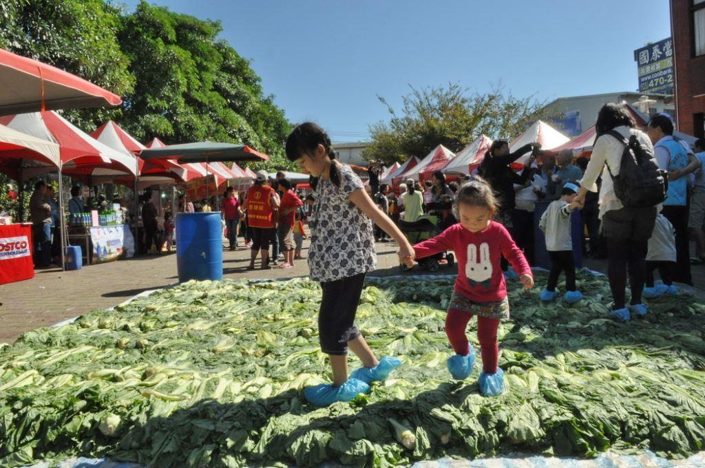 活動準備上千斤芥菜,讓民眾體驗古早踩鹹菜的樂趣。圖/新竹縣政府提供