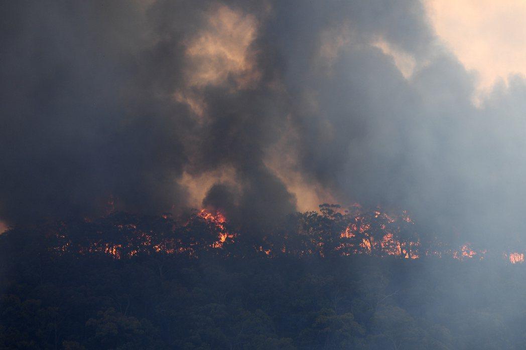 澳洲森林大火持續延燒,專家擔心情況可能惡化成火風暴。歐新社