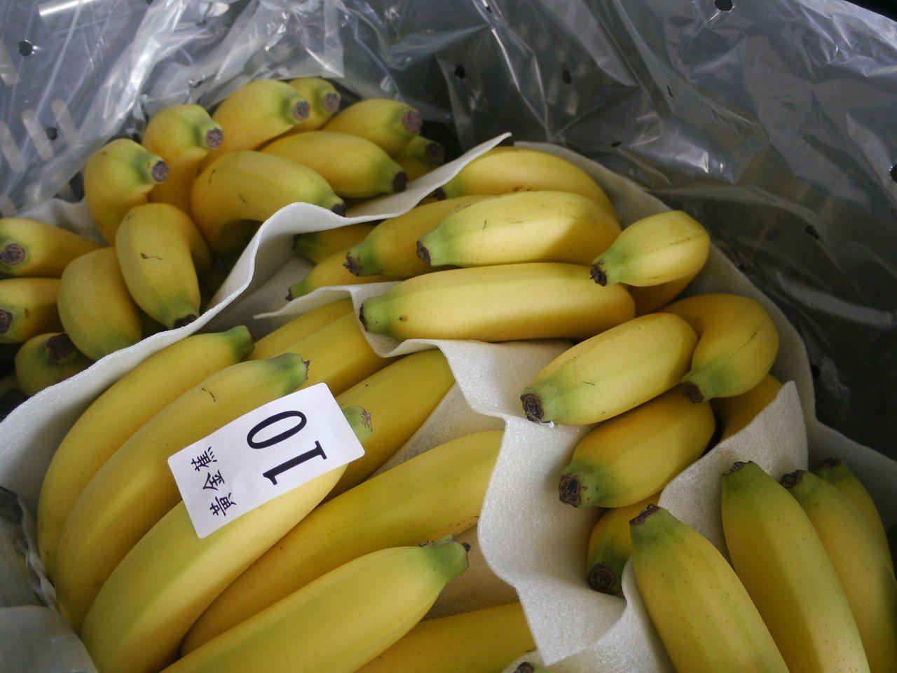 農委會在高雄、屏東試辦香蕉收入保險,多數農民仍在觀望階段。記者徐白櫻/攝影