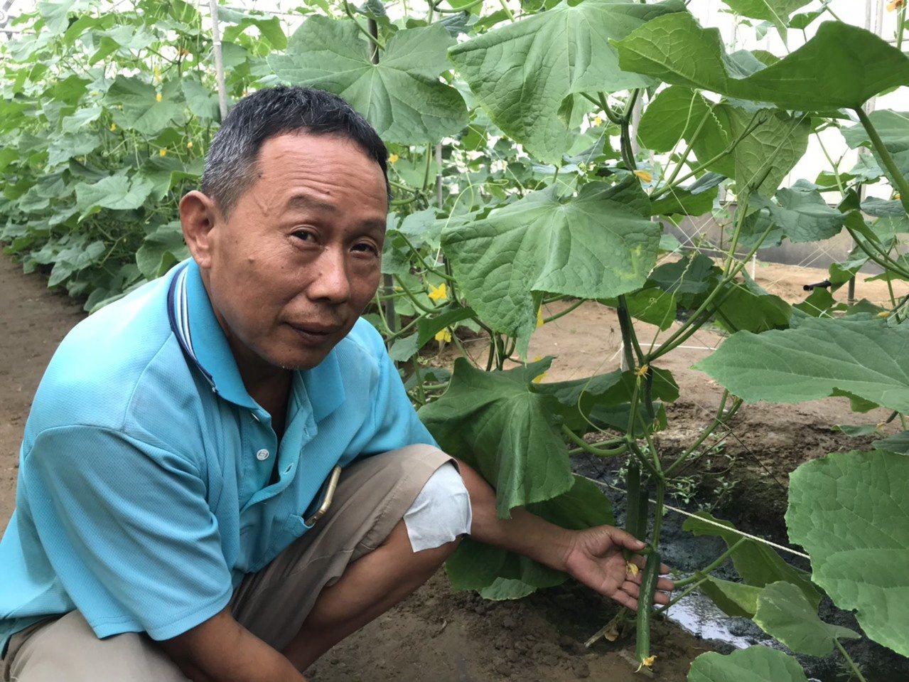 吳冠億細心栽種溫室蔬果,他笑說,沒噴農藥,現場直接吃也不用怕。記者黃晴雯/攝影