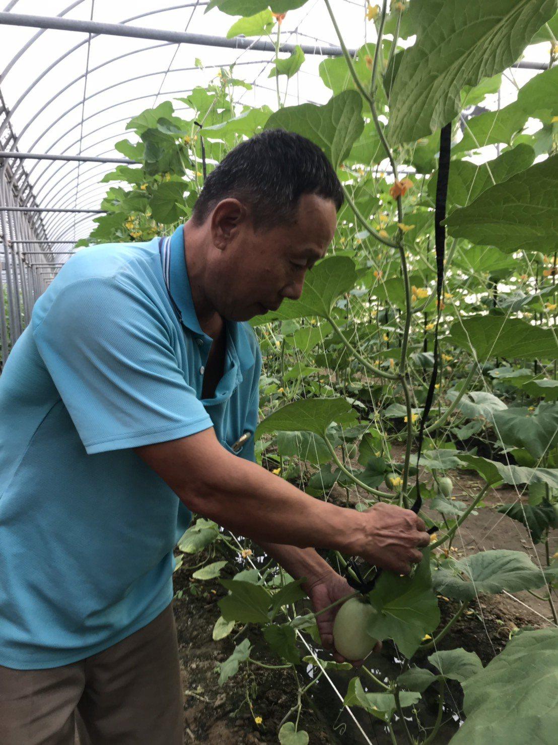 致力於栽種無噴灑農藥的溫室蔬果,吳冠億盼與更多重視有機栽種的農民交流。記者黃晴雯...