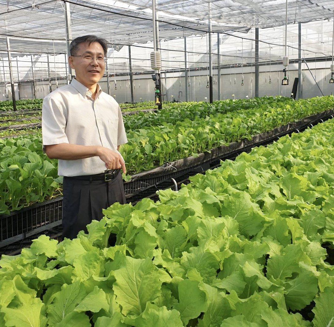 腎食堂低鉀蔬菜採離地栽種法,把蔬菜種在架子上,好處是非常乾淨,可以隔離病原菌,減...