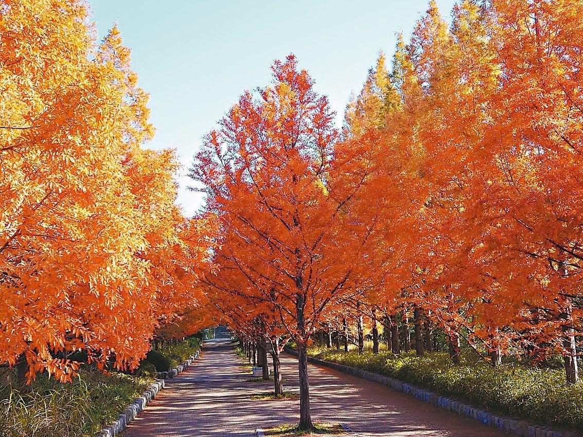 種植有38種、總計約3,000棵紅葉樹木的「神戶森林植物公園」。 圖/神戶觀光局...