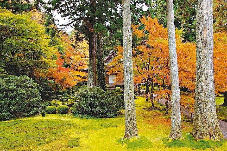 三千院擁有廣大的庭院,有著脫俗典雅的情調。 圖/京都市台灣推廣事務所提供