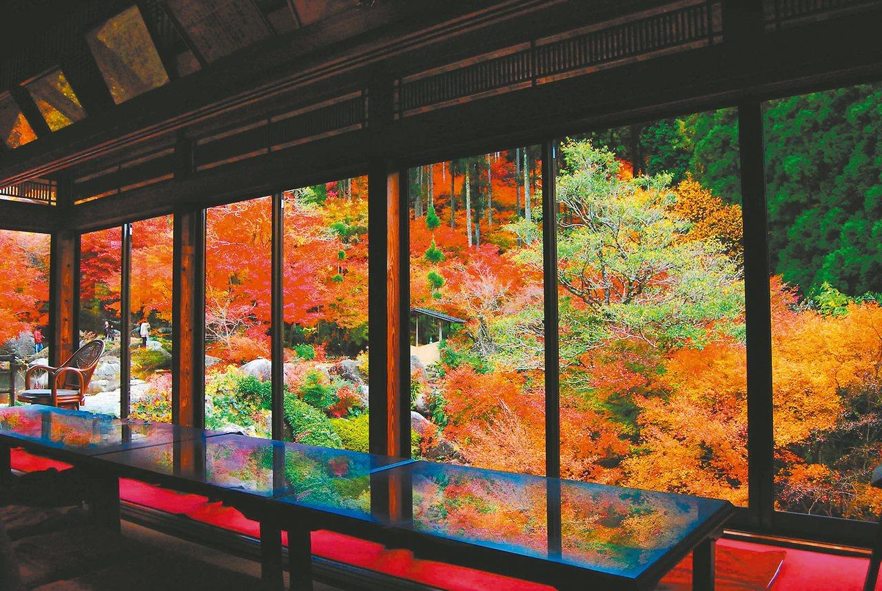 佐賀的「環境藝術之森」,擁有萬餘棵的楓樹。 圖/佐賀縣觀光聯盟提供