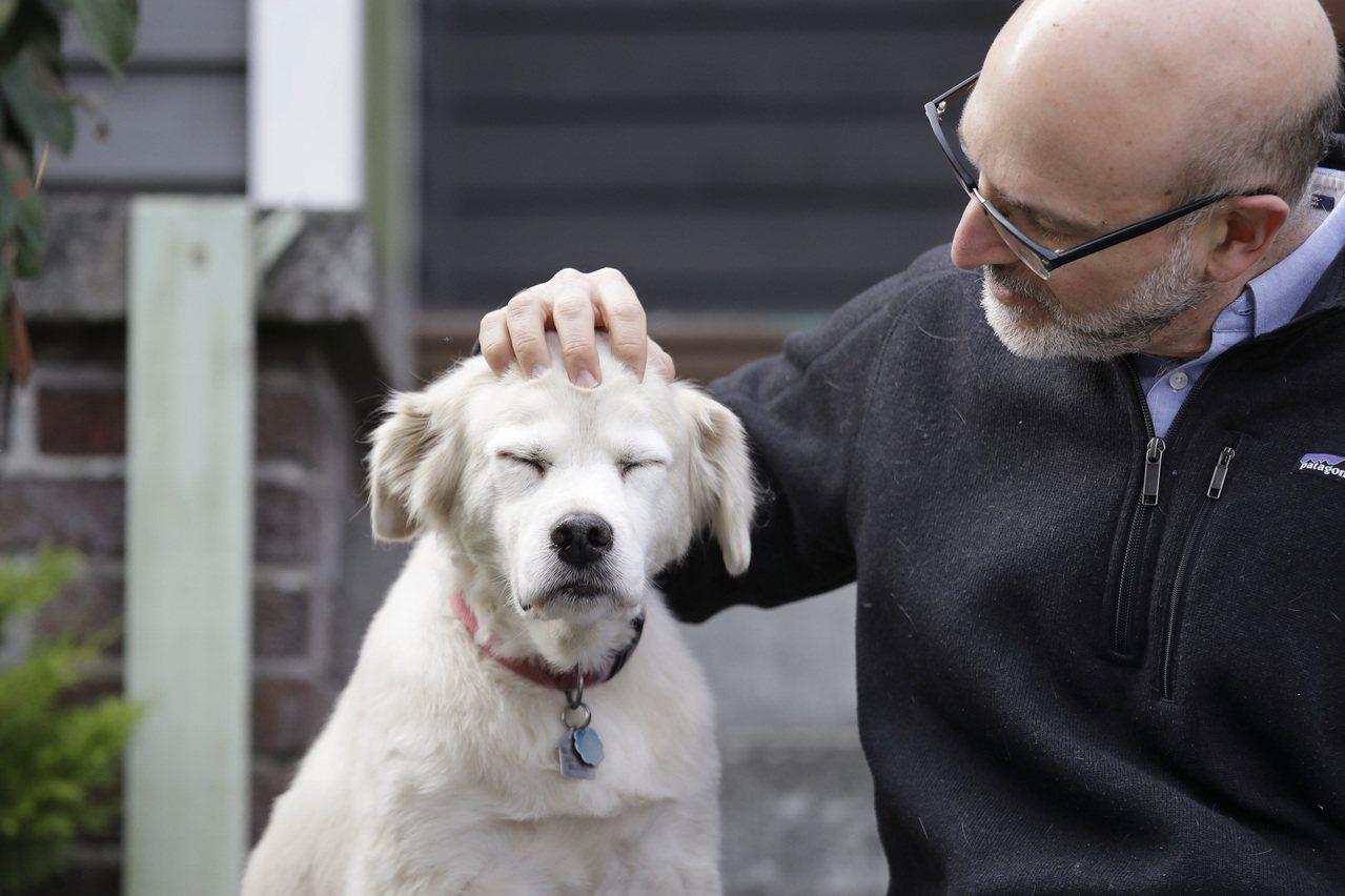 科學家現正進行有史以來最大規模的狗隻衰老研究,希望從中發現人類的長壽秘訣。圖為該...