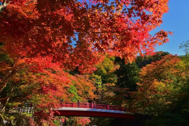 日本/「東北小嵐山」賞楓,青森中野山楓紅似火