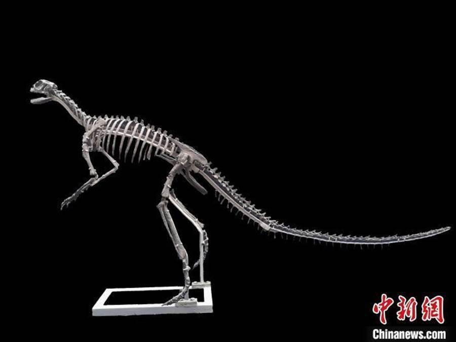 「磨刀溪三峽龍」骨骼具有獨特的形態特徵,生活年代距今約1.8億年。圖/中新網