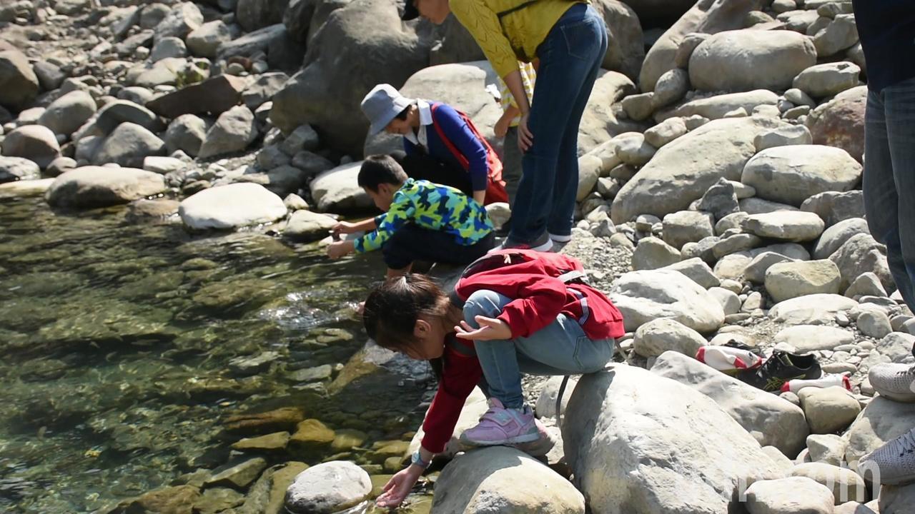 民眾可到鯝魚棲息地旁較平淺的地方洗腳、玩水,比較不會傷害到鯝魚。記者陳玫伶/攝影